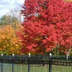fall trees red n yellow black fence