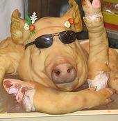 Crazy Pig Head